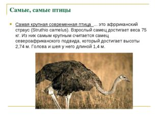 Самая крупная современная птица ... это афрриканский страус (Struthio camelu