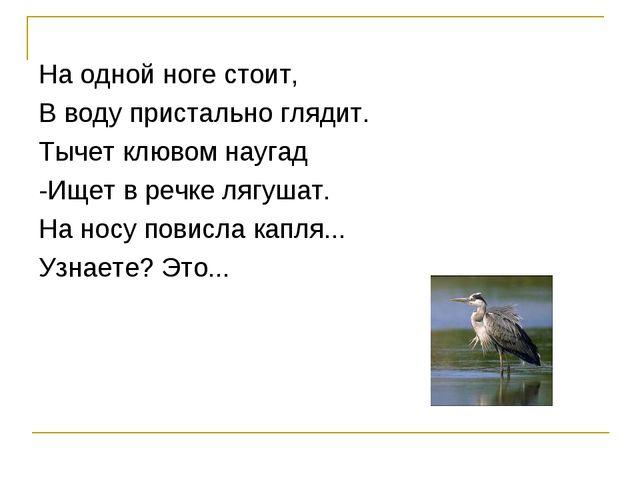 На одной ноге стоит, В воду пристально глядит. Тычет клювом наугад -Ищет в ре...