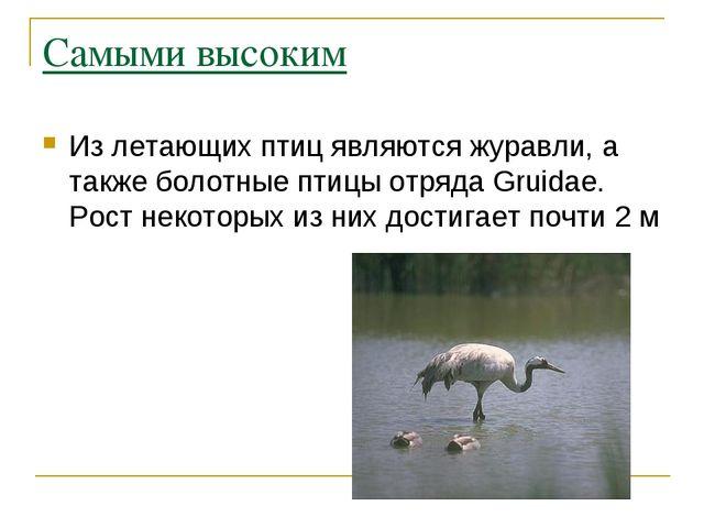 Самыми высоким Из летающих птиц являются журавли, а также болотные птицы отря...