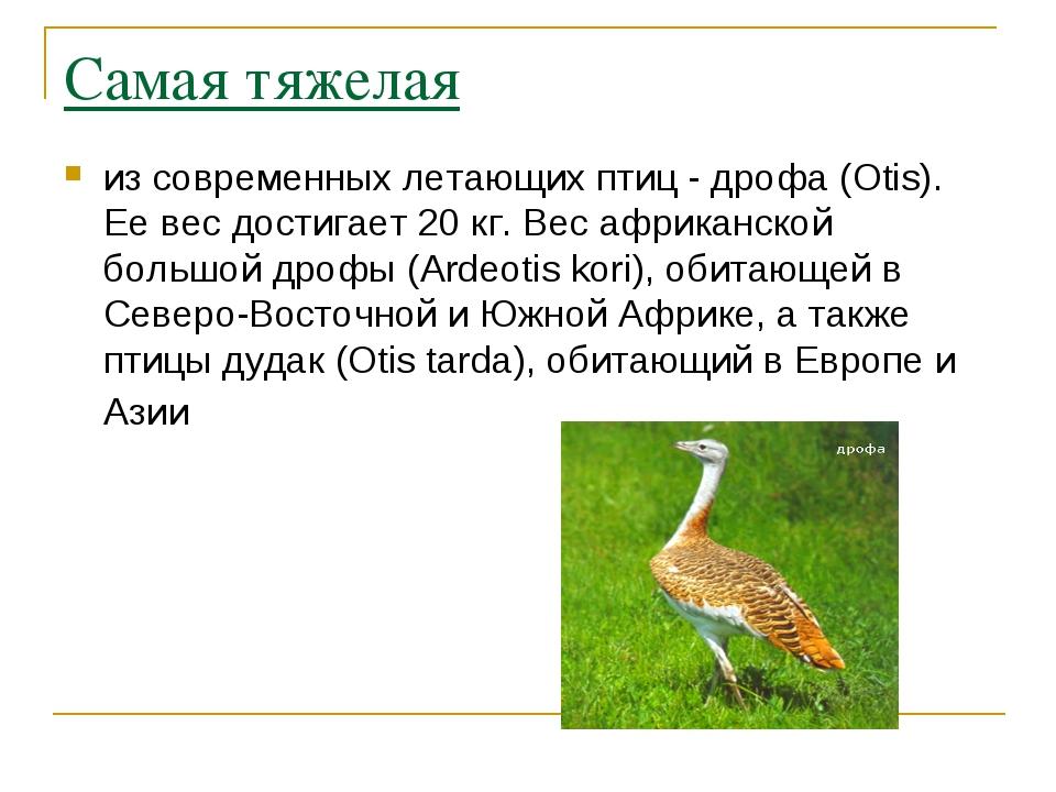 Самая тяжелая из современных летающих птиц - дрофа (Otis). Ее вес достигает 2...