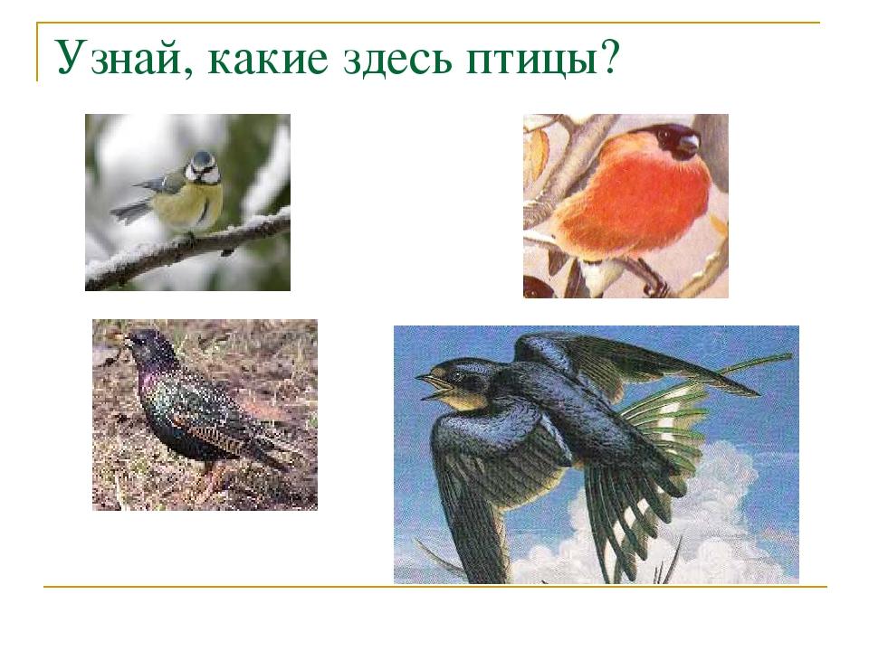 Узнай, какие здесь птицы?