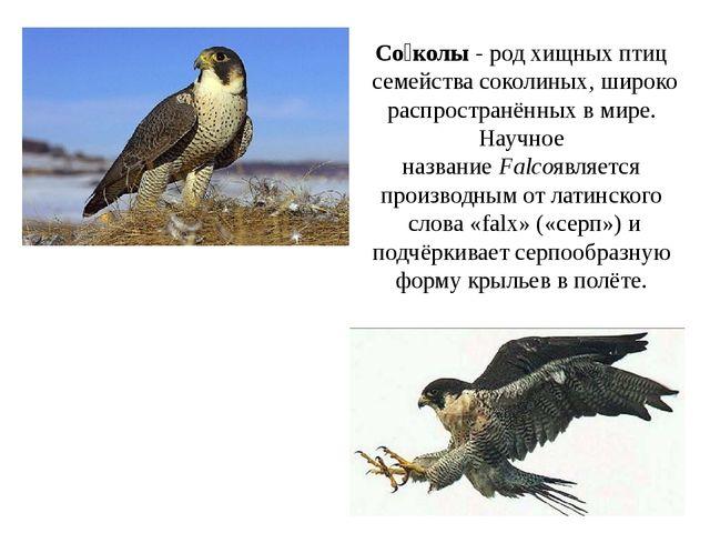 Со́колы- родхищных птицсемействасоколиных, широко распространённых в мире...