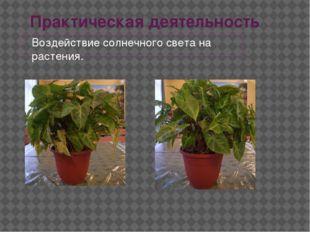 Практическая деятельность Воздействие солнечного света на растения.