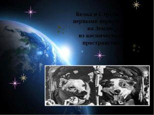 Белка и Стрелка – первыми вернулись на Землю из космического пространства