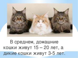 В среднем, домашние кошки живут 15 – 20 лет, а дикие кошки живут 3-5 лет.