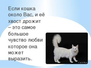 Если кошка около Вас, и её хвост дрожит – это самое большое чувство любви кот