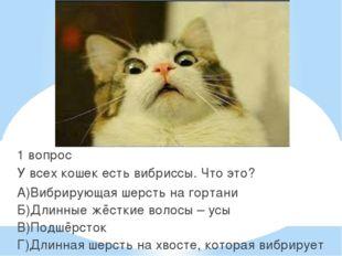 1 вопрос У всех кошек есть вибриссы. Что это? А)Вибрирующая шерсть на гортан