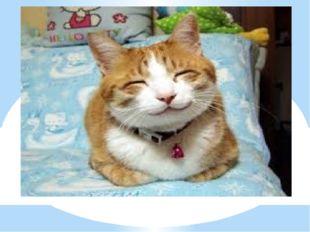2 вопрос Сколько у кошки чувствительных усов на морде? А) 17, Б) 4, В) 10, Г