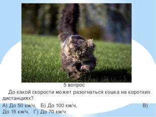 5 вопрос До какой скорости может разогнаться кошка на коротких дистанциях? А