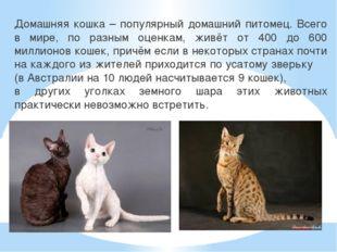 Домашняя кошка – популярный домашний питомец. Всего в мире, по разным оценкам