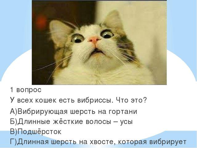 1 вопрос У всех кошек есть вибриссы. Что это? А)Вибрирующая шерсть на гортан...