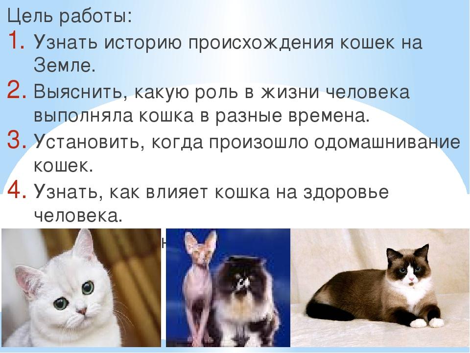 Цель работы: Узнать историю происхождения кошек на Земле. Выяснить, какую рол...