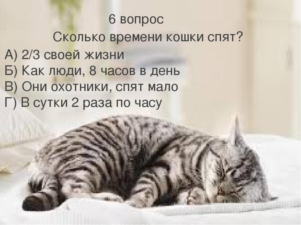 6 вопрос Сколько времени кошки спят? А) 2/3 своей жизни Б) Как люди, 8 часов...
