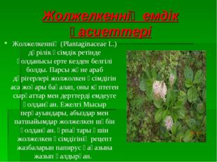 Жолжелкеннің емдік қасиеттері Жолжелкеннің (Plantaginaceae L.) дәрілік өсімді