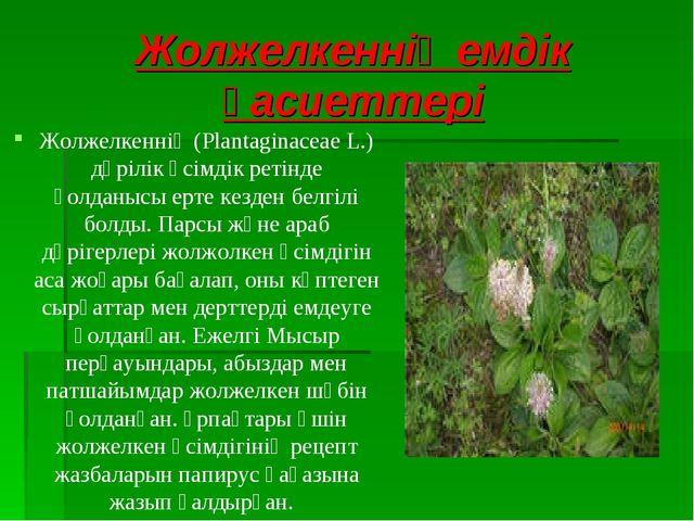 Жолжелкеннің емдік қасиеттері Жолжелкеннің (Plantaginaceae L.) дәрілік өсімді...