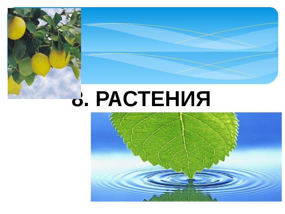 8. РАСТЕНИЯ