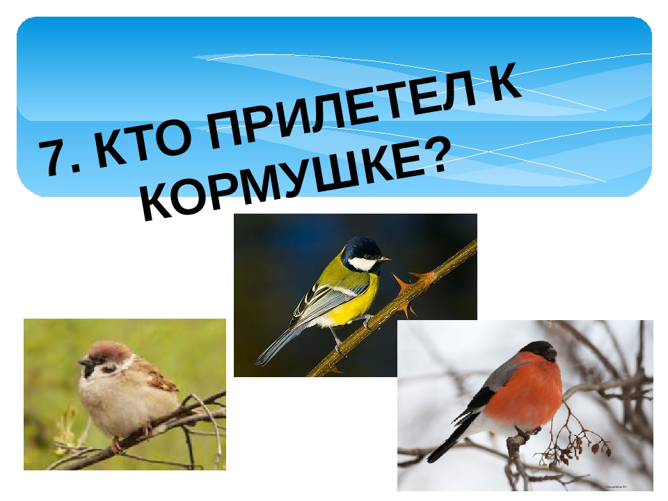 7. КТО ПРИЛЕТЕЛ К КОРМУШКЕ?