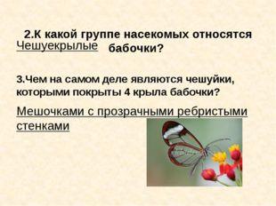 2.К какой группе насекомых относятся бабочки? Чешуекрылые 3.Чем на самом дел