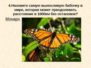 4.Назовите самую выносливую бабочку в мире, которая может преодолевать рассто