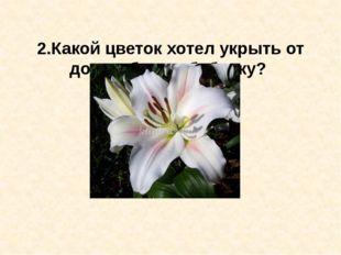2.Какой цветок хотел укрыть от дождя белую бабочку?