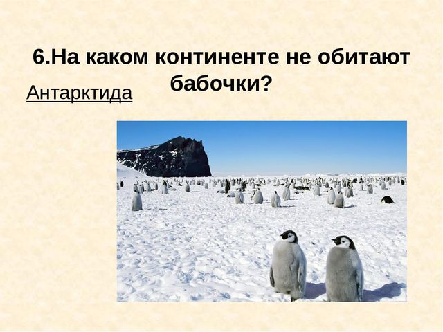6.На каком континенте не обитают бабочки? Антарктида