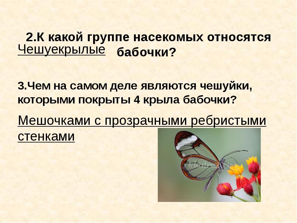 2.К какой группе насекомых относятся бабочки? Чешуекрылые 3.Чем на самом дел...