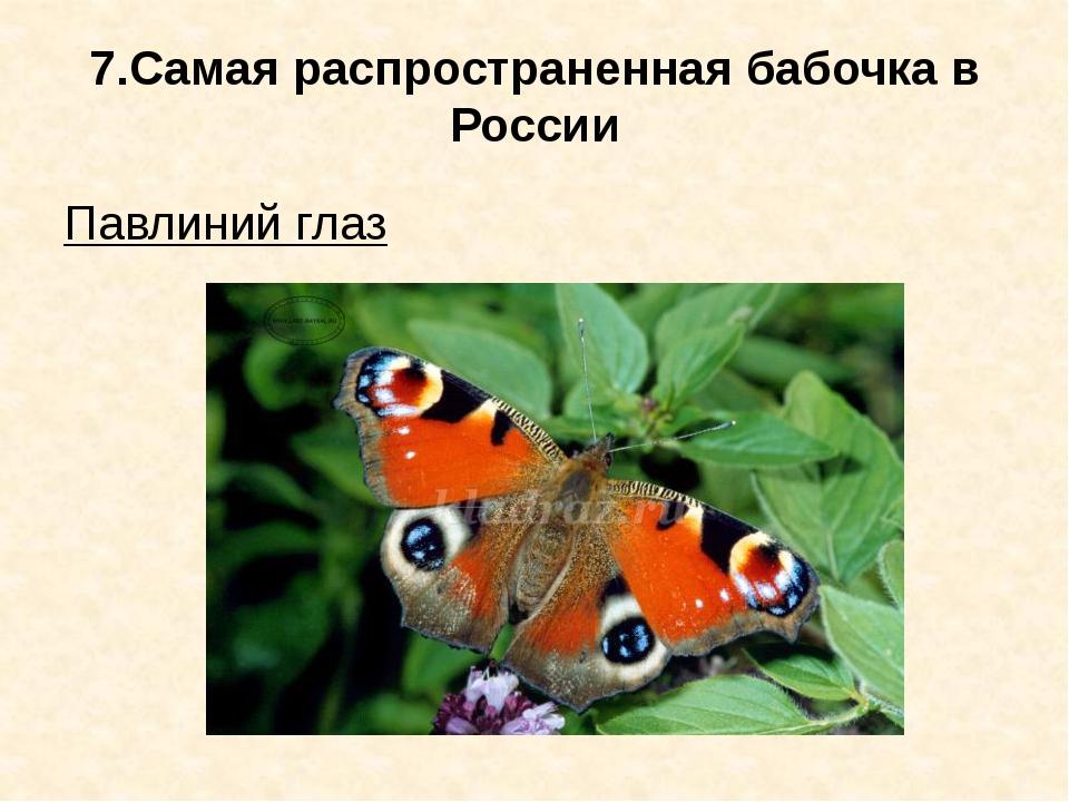 7.Самая распространенная бабочка в России Павлиний глаз