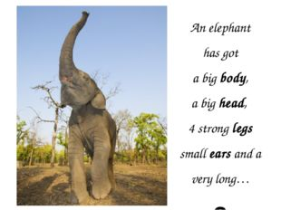 An elephant has got a big body, a big head, 4 strong legs small ears and a ve