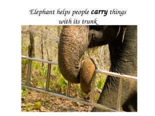 Elephant helps people carry things with its trunk