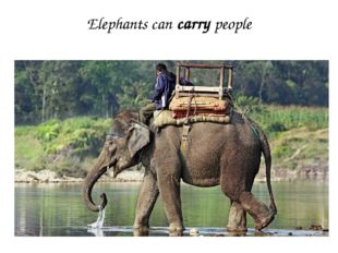 Elephants can carry people