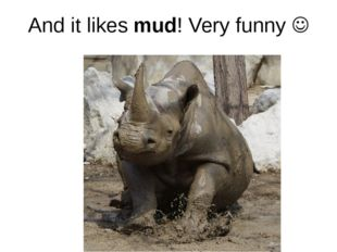And it likes mud! Very funny 