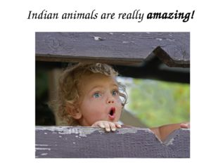 Indian animals are really amazing!
