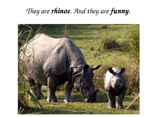 They are rhinos. And they are funny.