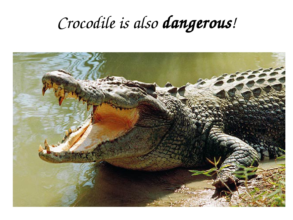 Crocodile is also dangerous!