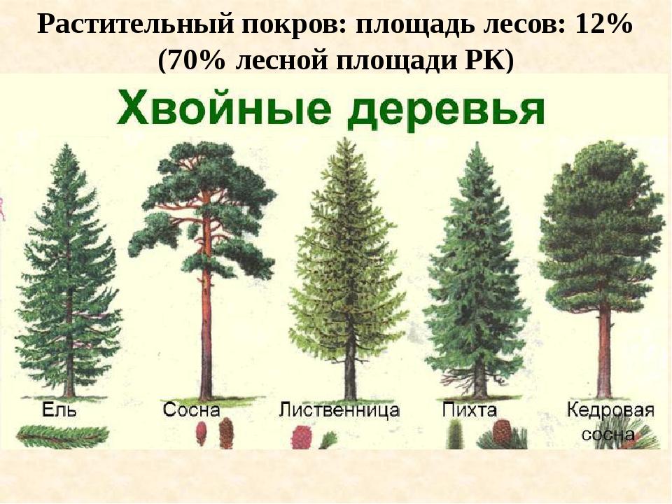 Растительный покров: площадь лесов: 12% (70% лесной площади РК)
