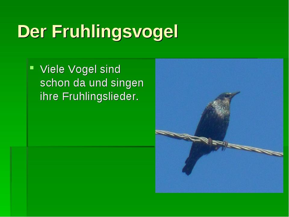 Der Fruhlingsvogel Viele Vogel sind schon da und singen ihre Fruhlingslieder.