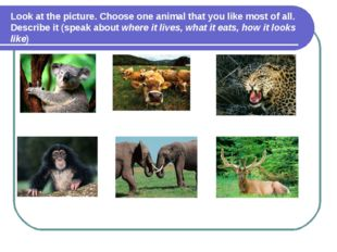 Look at the picture. Choose one animal that you like most of all. Describe it