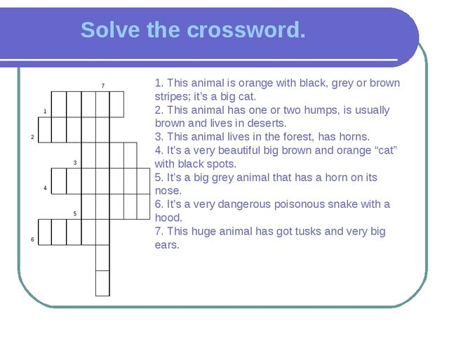 Solve the crossword. 1. This animal is orange with black, grey or brown strip...
