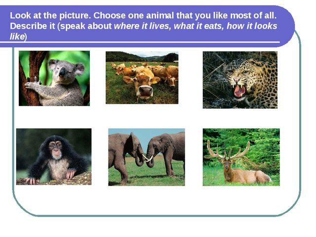 Look at the picture. Choose one animal that you like most of all. Describe it...