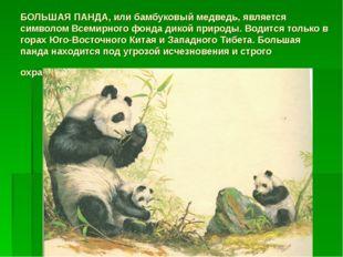 БОЛЬШАЯ ПАНДА, или бамбуковый медведь, является символом Всемирного фонда дик