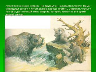 Американский бурый медведь. По-другому он называется гризли. Мама-медведица в