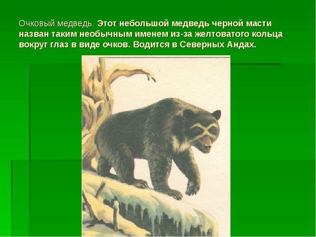 Очковый медведь. Этот небольшой медведь черной масти назван таким необычным и...