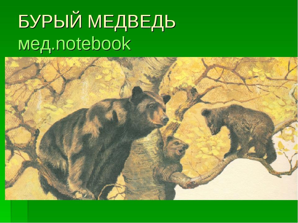 БУРЫЙ МЕДВЕДЬ мед.notebook