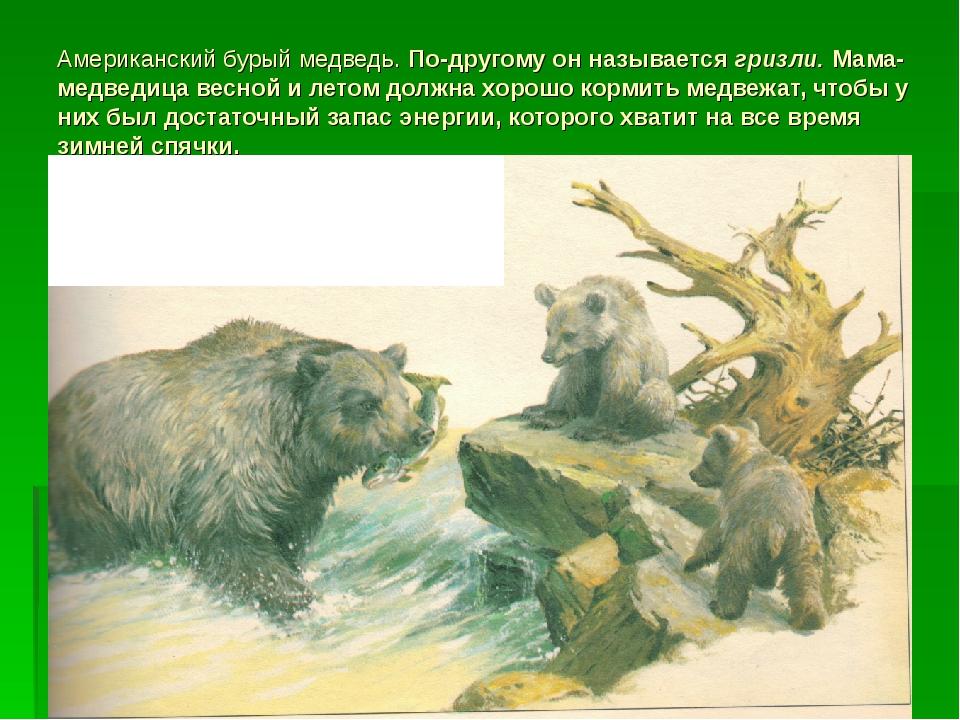 Американский бурый медведь. По-другому он называется гризли. Мама-медведица в...