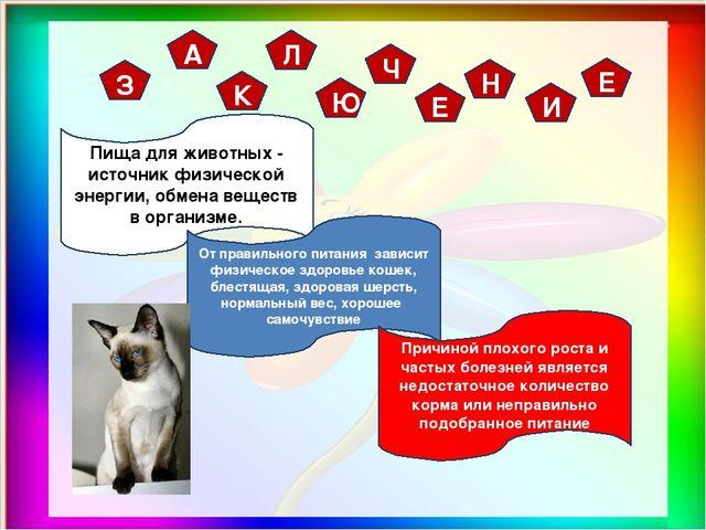 З А К Л Ю Ч Е Н И Е Пища для животных - источник физической энергии, обмена в...