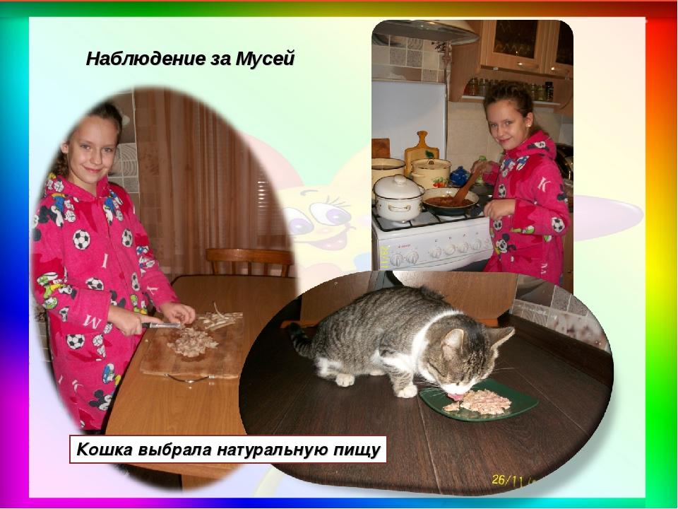 Кошка выбрала натуральную пищу Наблюдение за Мусей