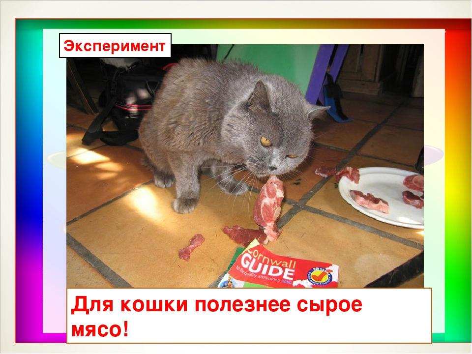 Для кошки полезнее сырое мясо! Эксперимент