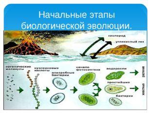 Начальные этапы биологической эволюции.