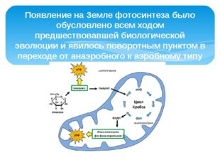 Появление на Земле фотосинтеза было обусловлено всем ходом предшествовавшей б