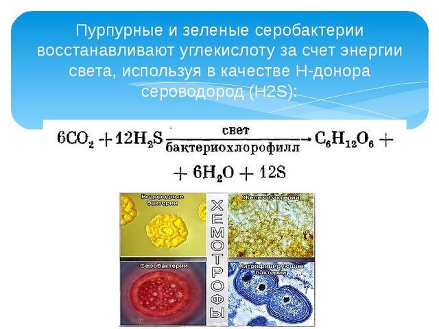 Пурпурные и зеленые серобактерии восстанавливают углекислоту за счет энергии...
